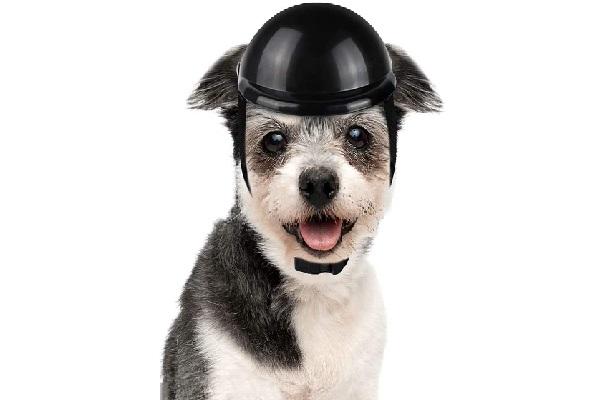 LESYPET Dog Helmet