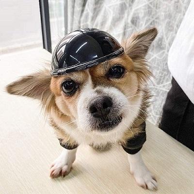Namsan Pet Helmet