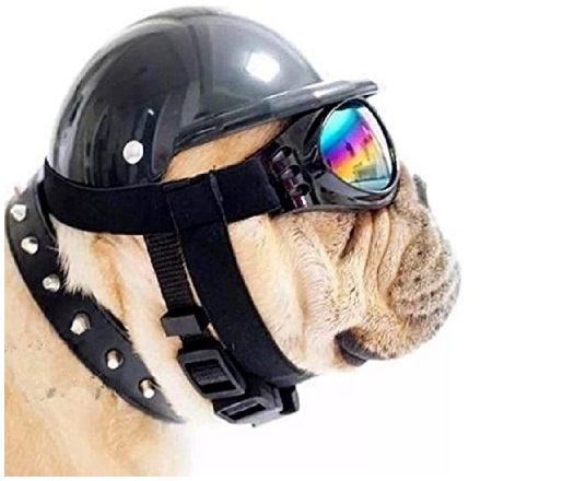 ShopTrend Dog Hat with Goggles