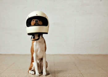 Dog Motorcycle Helmet